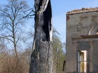 Pałac w Karżniczce - spalone drzewo
