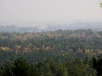 Widok z platformy widokowej Czołpino