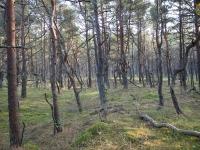 Las przy drodze do platformy widokowej - SPN