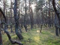Las przy drodze do platformy widokowej 2 - SPN