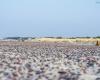 Plaża Czołpino - SPN 4