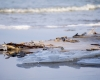 Czołpino - wydma i plaża - Słowiński Park Narodowy - 4