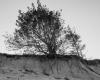 Czołpino - wydma i plaża - Słowiński Park Narodowy - 9