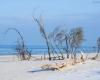Czołpino - wydma i plaża - Słowiński Park Narodowy - 17