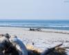 Czołpino - wydma i plaża - Słowiński Park Narodowy - 19