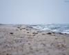 Czołpino - wydma i plaża - Słowiński Park Narodowy - 35