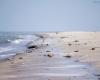 Czołpino - wydma i plaża - Słowiński Park Narodowy - 37