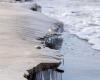 Czołpino - wydma i plaża - Słowiński Park Narodowy - 41