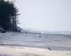 Czołpino - wydma i plaża - Słowiński Park Narodowy - 45