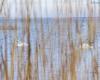 Izbica - Jezioro Łebsko - Słowiński Park Narodowy 4