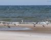 Plaża - Lędowo 6