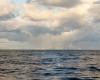 Łabędzie na morzu